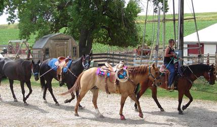 Cindy\'s Horses